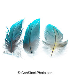 bird feathers ioslated - Colorful bird feathers, isolated on...