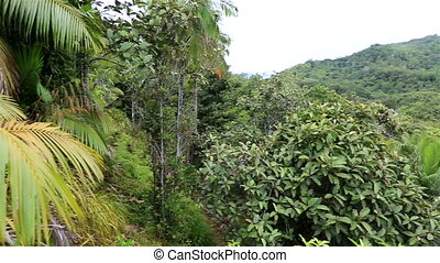 Topography of the Vallee de Mai Nature Reserve - Vallee de...