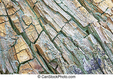 Rotten wood - Abstract concept of the old crumbling wood