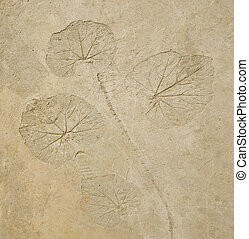 Imprint leaf on cement floor background
