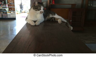 Dolly Shot with Cat Lying Down On Wooden Table, stock video