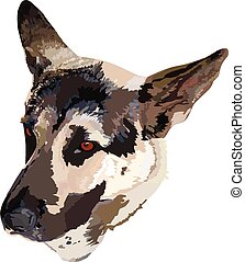German Shepherd - image of a German Shepherd