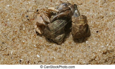 pair of hermit crabs in the sand close-up