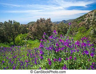 Inland La Gomera, flowering mountain meadows