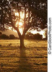 Oak holm, ilex in a mediterranean forest. Cabaneros park,...
