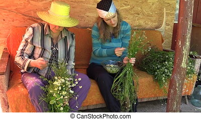 women gather chamomile - Grandmother and young granddaughter...