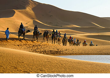 Caravan of tourists on camels riding to the desert passing...