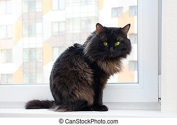 cat on the window in a new apartment house - cat in a new...