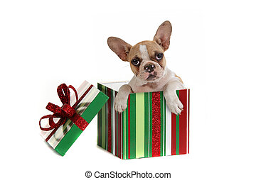Dog Inside a Christmas Gift - Puppy Dog Inside a Christmas...