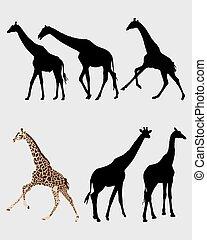 giraffes - Silhouette of giraffes, vector illustration