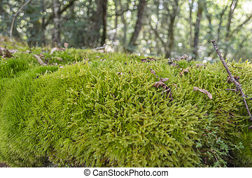 Mossy stone wall in a wet forest