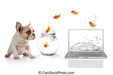 Cute Puppy Watching Goldfish Escaping the Virtual World -...