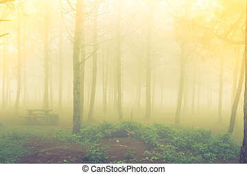 Forest tree during a foggy day ( Filtered image processed...