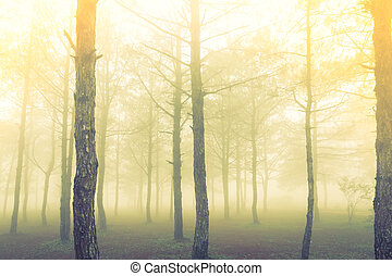 Forest tree during a foggy day Filtered image processed...
