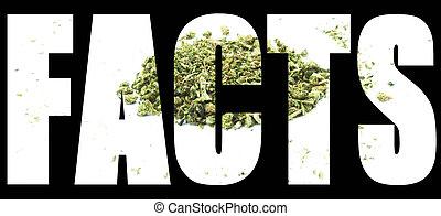 fatos,  Marijuana