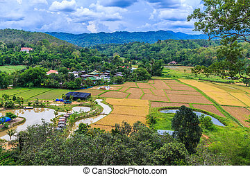 Paddy views and village in chiang mai asia Thailand