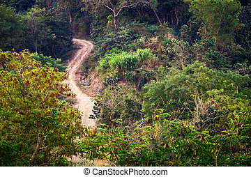 Rural road at tropical forest. Nature colors background