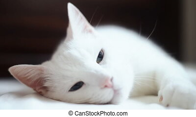 Cute white cat relaxes on bed