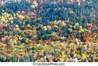 Background of yellow and orange trees in autumn in a forest
