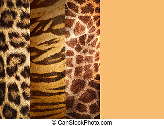 Texture of animal skins ,leopard,tiger and giraffe