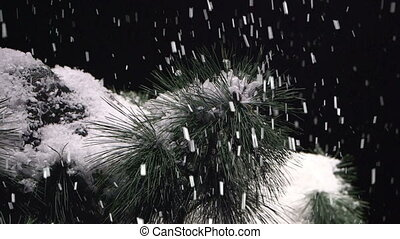 snow falling on evergreen tree