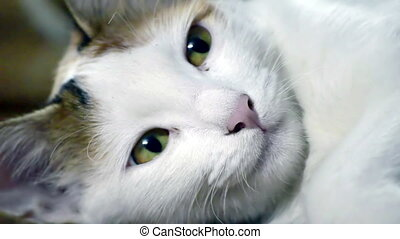 Closeup of a young cat with yellow eyes