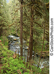 Natural Forest, Alaska, USA - Forest near the city of Juneau...