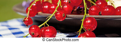 Red currants - Freshly picked red currants on a silver plate