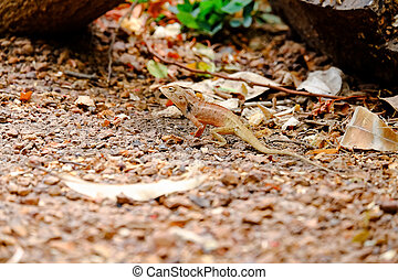 While the lizards are seen not to be a victim.