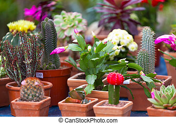 different cactuses on a show-window of flowers shop