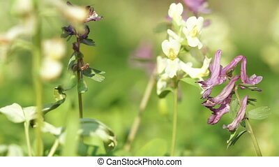 Wild flowers - Macro of wild flowers in forest and...