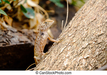 Lizards are looking for victims who want to capture.