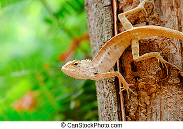 Lizards are ambush prey