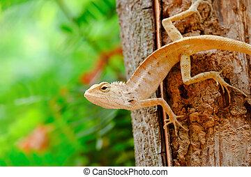 Lizards are ambush prey