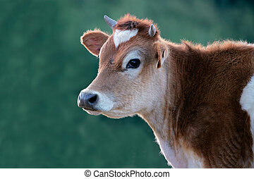 Cow portrait - Portrait of a cow against a green background