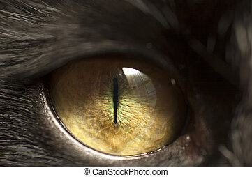 Black cat eye - Macro shoot of black cat eye with reflection...