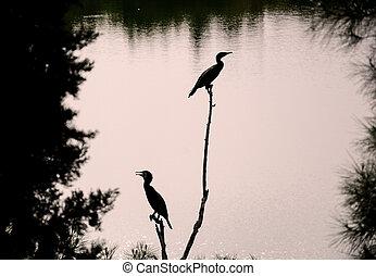 two birds are enjoying morning sun