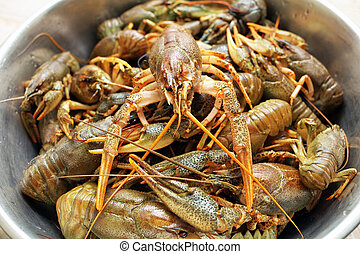 Live crawfishes in a metal bowl before cooking