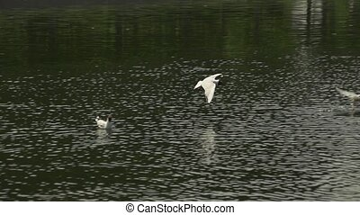 Slow motion flying seagulls over water background - Flying...