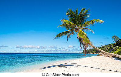 Coconut palm tree on tropical beach, Seychelles