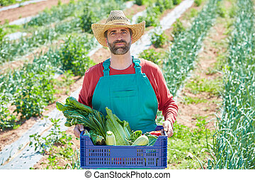 Farmer man harvesting vegetables in orchard