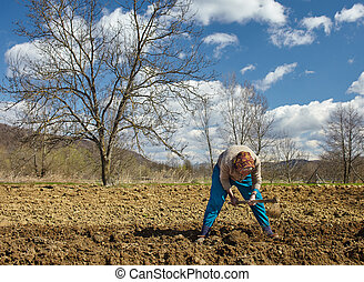Senior woman sowing potatoes