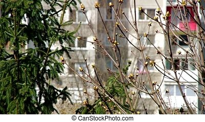 Spring behind the window - Budding trees behind the window...