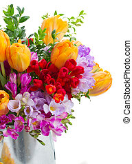 freesia and tulip flowers - blue, violet and red freesia and...