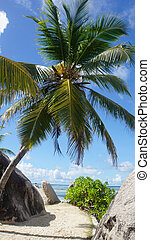 tropical paradise - anse source dargent on la digue