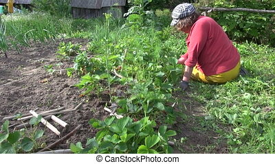 grandmother woman weeding - Senior gardener grandmother...