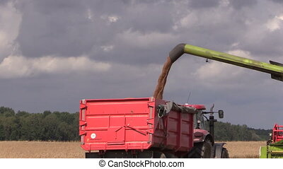 thresher unload grain - Combine thresher load wheat grain...