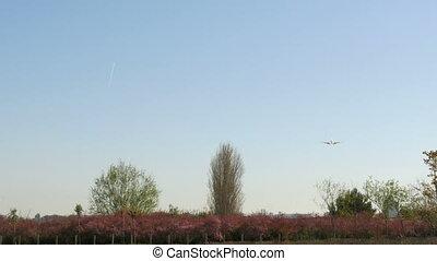 Jet plane Boeing 737-6D6 landing - Air Algerie passenger jet...
