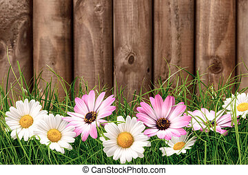 Flowers on grass in front of wooden fence - White and pink...