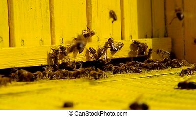 Bees at the entrance to the beehive